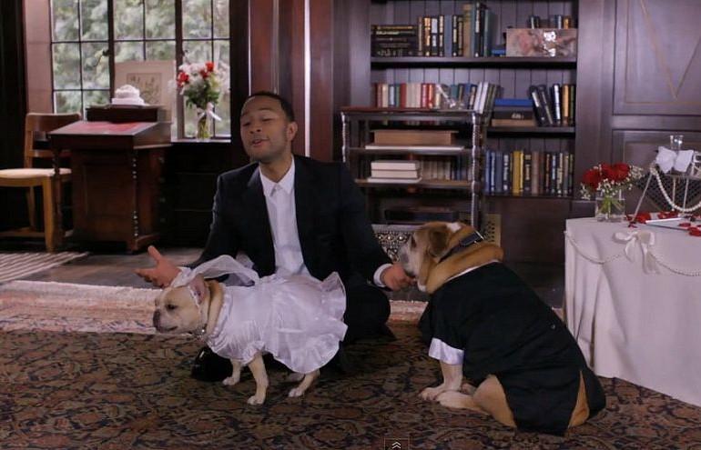 Ezen az esküvőn nem érezték kutyául magukat